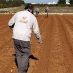 Naranjas masil tradición agricultura