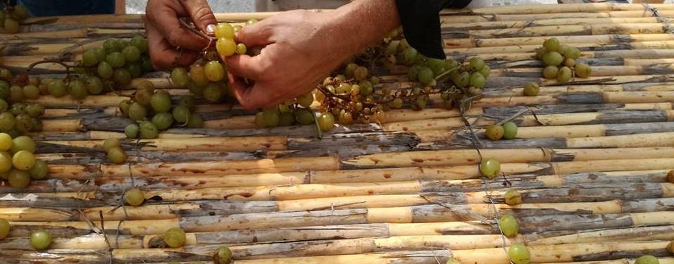 Frutas verduras temporada producción ecológica SPG Denia