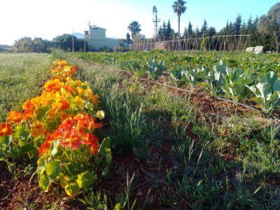 Orgànic Dénia agricultura biodinàmica