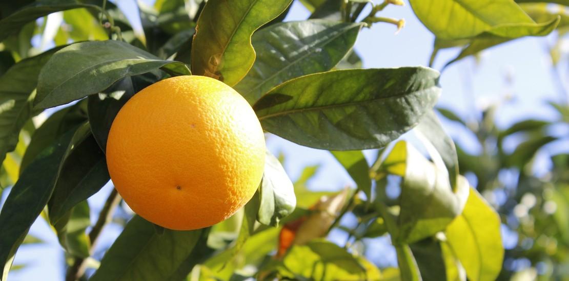 Ayudas distribución frutas alumnado centros escolares