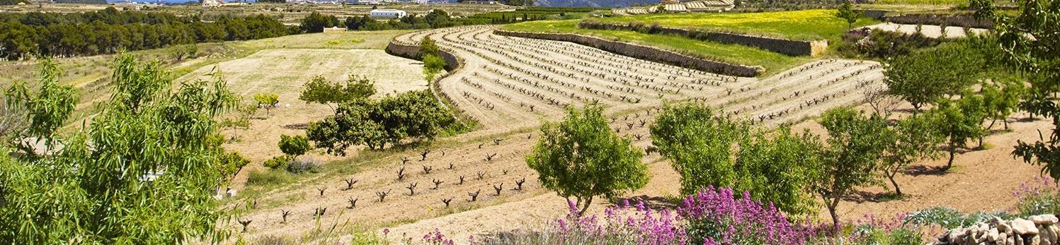 Aviso legal Xarxa Agricola Marina Alta