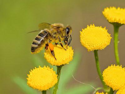 animal-bee-bloom-blooming-460961
