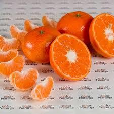 cítricos Inmoagro color naranja